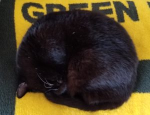 A black cat curled up on a yellow and green blanket.