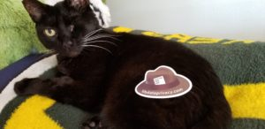A brown hat sticker placed on top of a black cat looking at the camera.