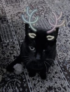 A one eyed black cat with cartoon antlers sitting and looking up.