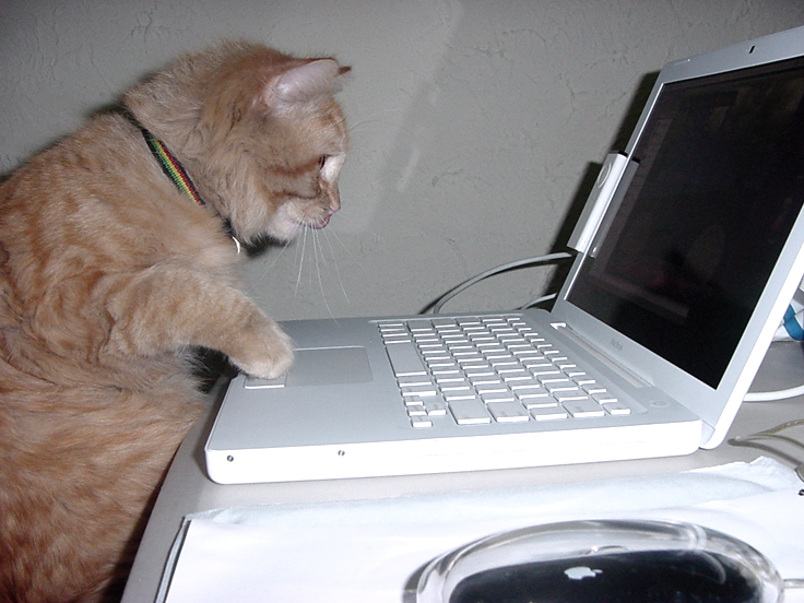 An orange cat looking at a laptop screen and pawing a mouse tracking pad.
