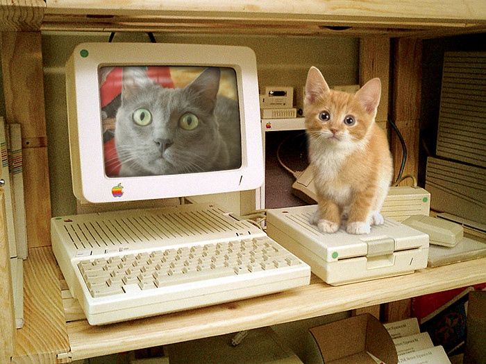 A small orange and white kitten sits on an Apple floppy drive, while a picture of a gray cat is displayed on an Apple monitor.