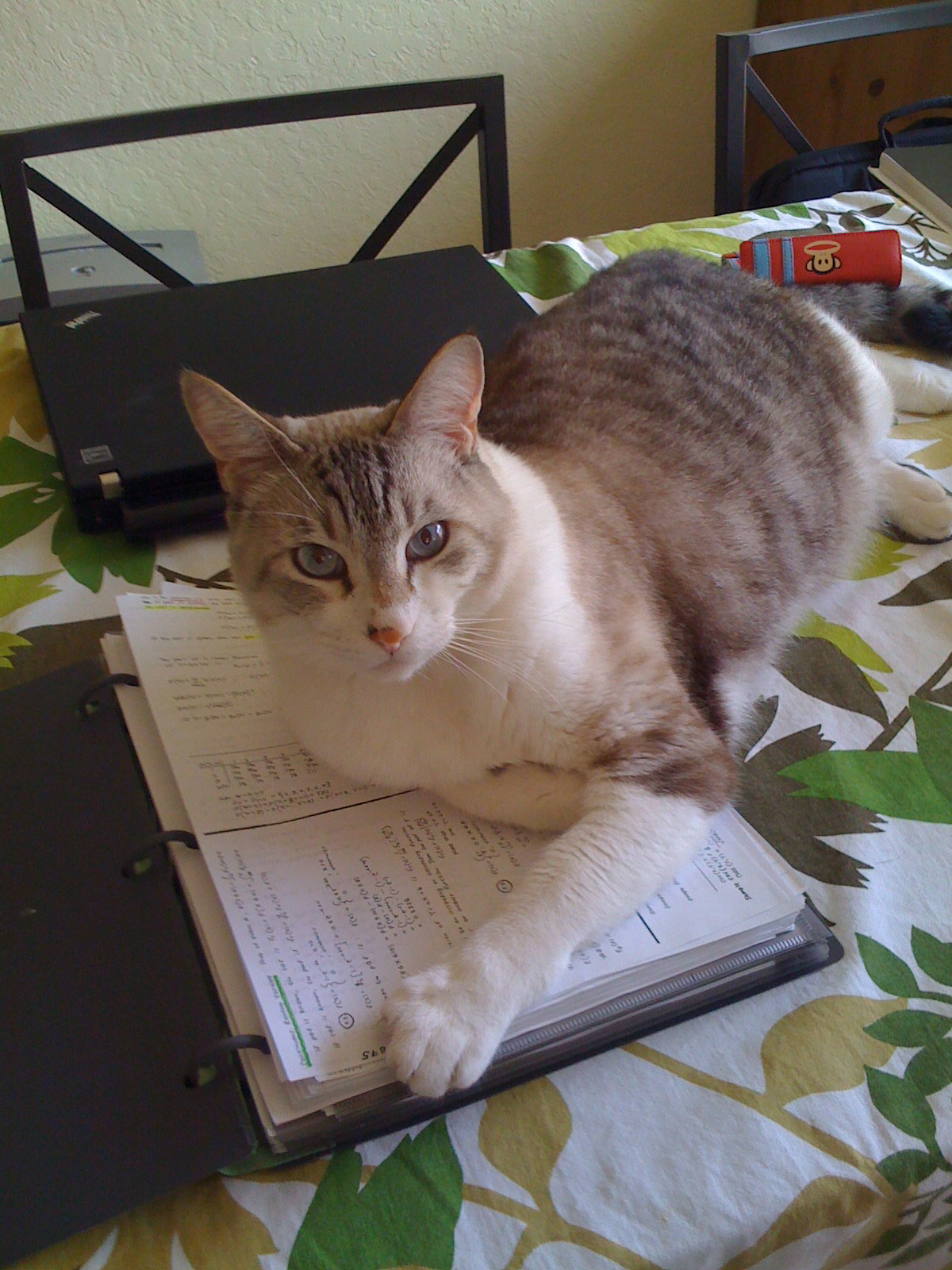 A grey and white tabby cat laying down on top of a binder of handwritten notes sitting on a table.